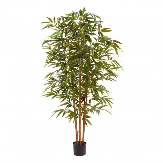Amazing Bamboo Plant Picture