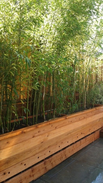 Amazing Bamboo Planter Box Photo