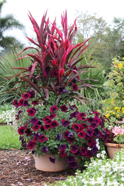Amazing Container Gardens For Full Sun Picture