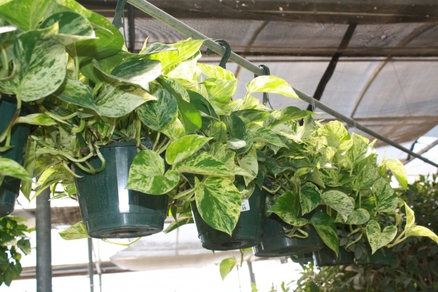 Amazing Fast Growing House Plants Picture