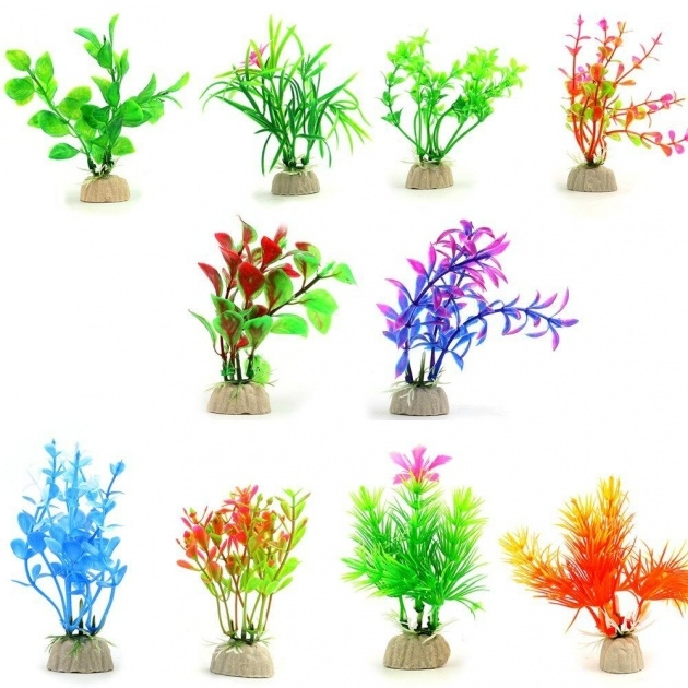 Amazing Fish Tank Plants Picture