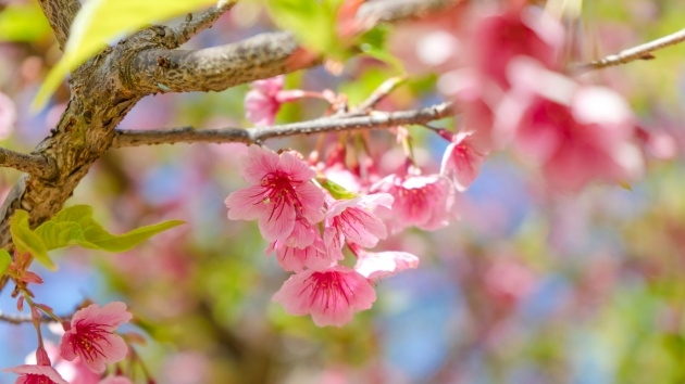 Amazing Flowering Trees List Picture