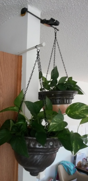 Amazing Hooks For Hanging Plants Photo
