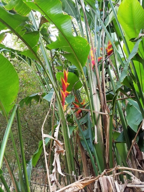 Amazing Kauai Plants Photo