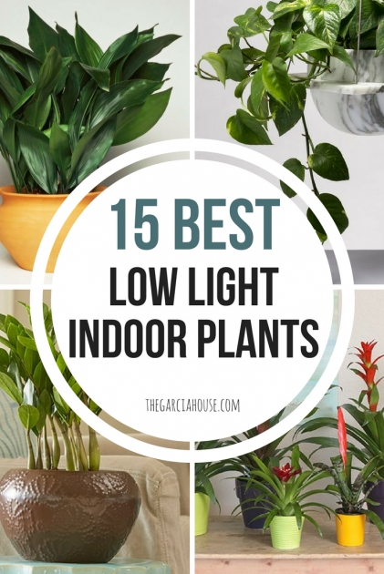 Amazing Low Light Indoor Plants Picture