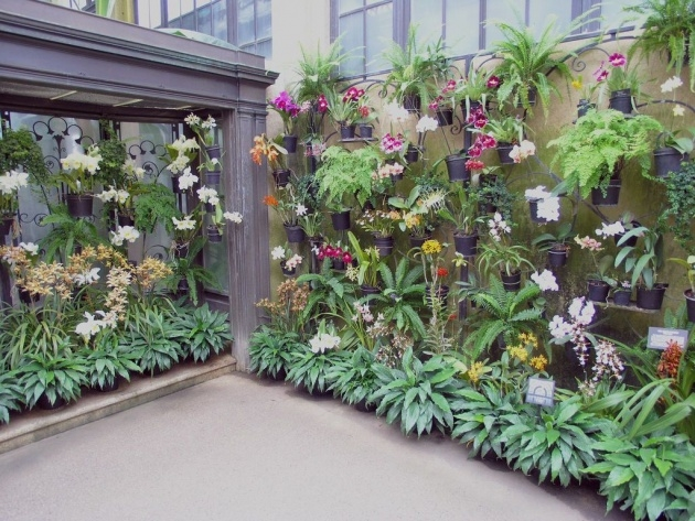 Amazing Orchid Wall Planter Photo
