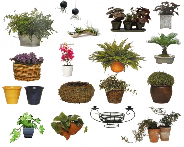 Amazing Plant Pot Sizes Photo