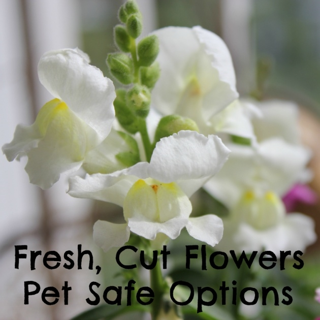 Amazing Safe Flowers For The Garden With Cat Picture