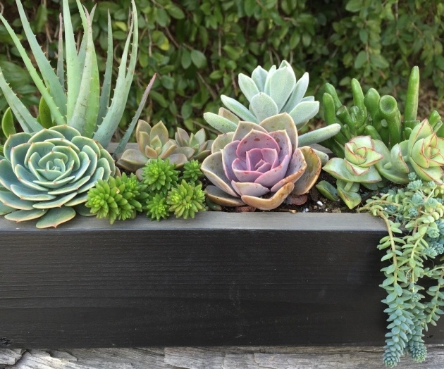 Amazing Succulent Planter Box Image