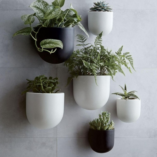 Amazing Wall Plant Pots Picture