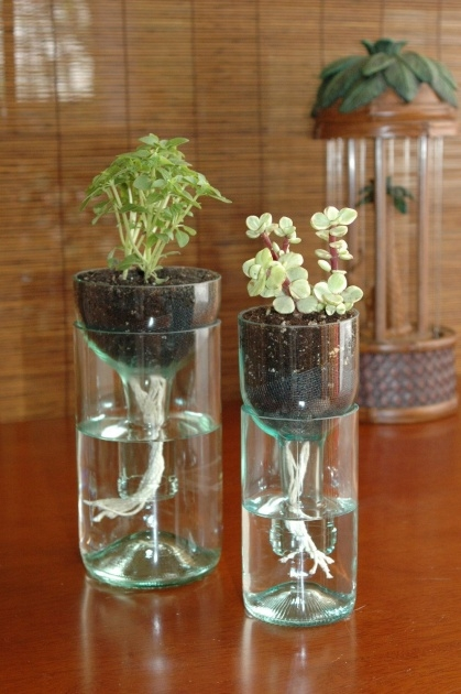 Amazing Water Bottle Planter Photo