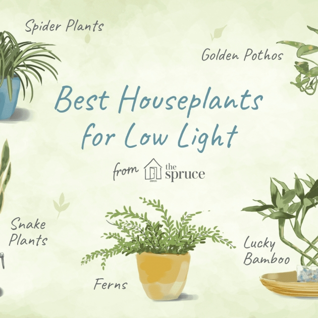 Amazingly Best Indoor Plants For Low Light Picture