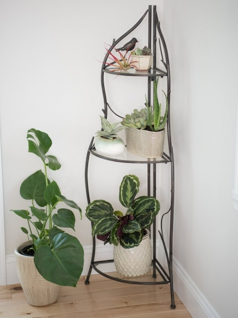 Amazingly Corner Plant Stand Picture