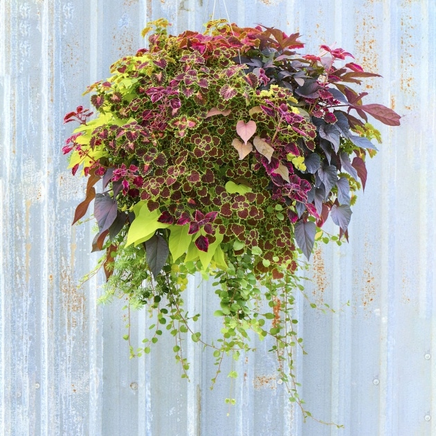 Amazingly Hanging Basket Foiliage Photo