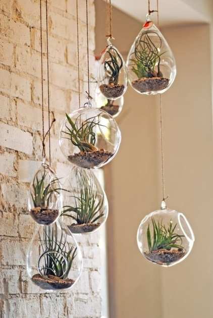Amazingly Hanging Plant Decor Image