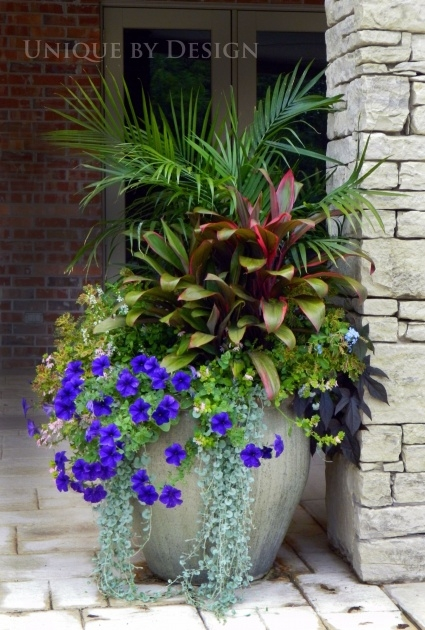 Amazingly Large Exterior Pot Plants Photo