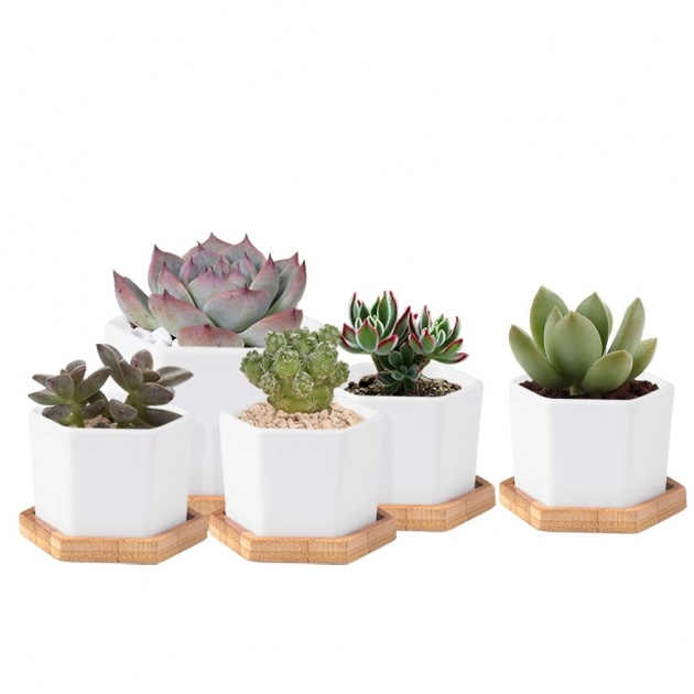 Amazingly Mini Plant Pots Photo