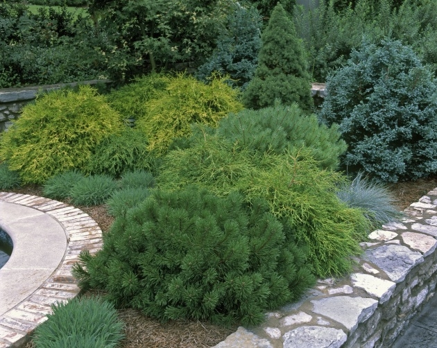 Amazingly Most Popular Landscaping Shrubs Photo