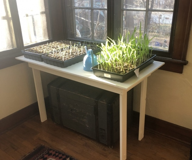 Amazingly Plant Table Indoor Picture