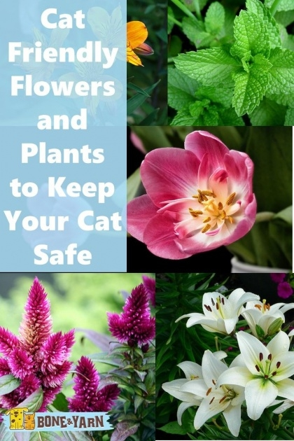 Amazingly Safe Flowers For The Garden With Cat Picture