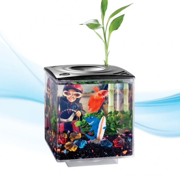 Awesome Betta Fish Plants Picture