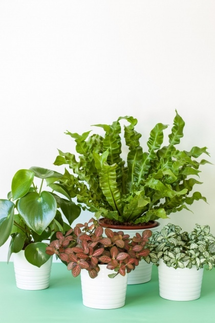Awesome Common House Plants Image