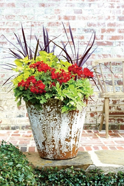 Awesome Container Gardens For Full Sun Photo