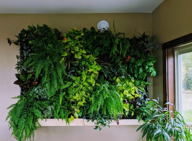 Awesome Diy Indoor Plant Wall Image