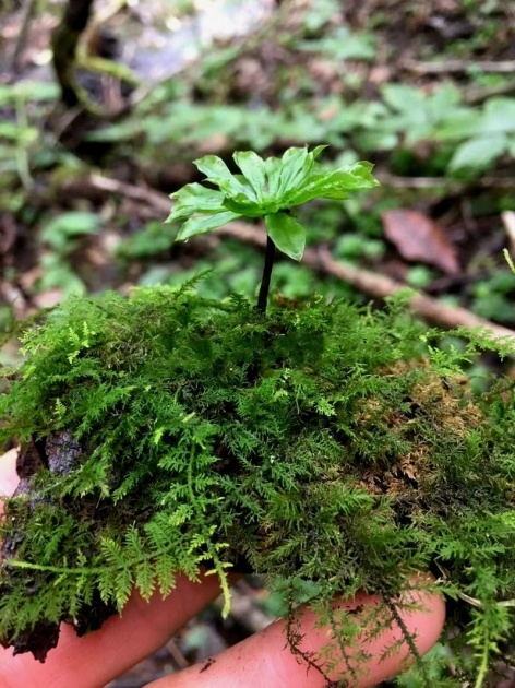 Awesome Moss Plant Image