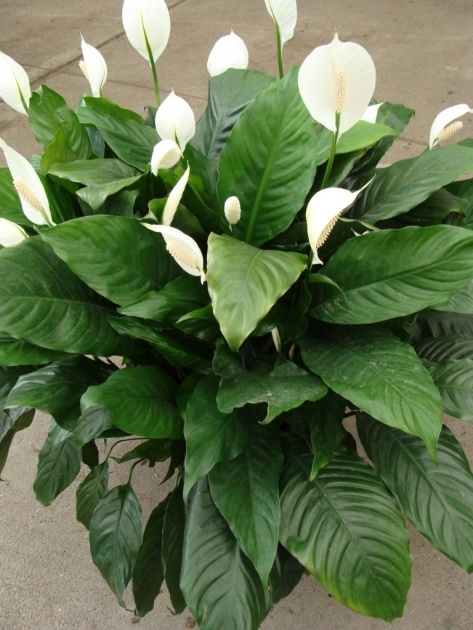 Awesome Name Of Tropical Plants With Pictures Image
