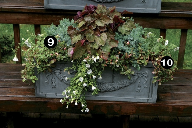 Awesome Plants For Planter Boxes Picture