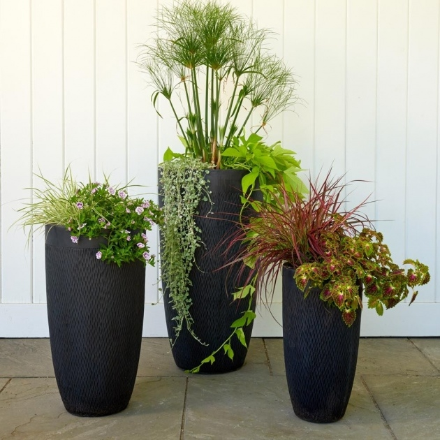 Awesome Tall Black Planter Picture