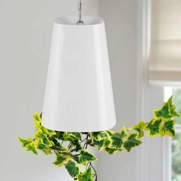 Awesome Upside Down Hanging Plants Photo