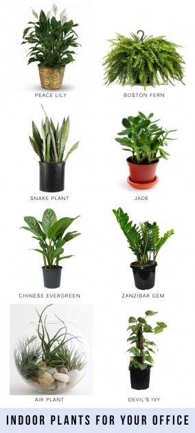 Best Air Purifying Indoor Plants Image