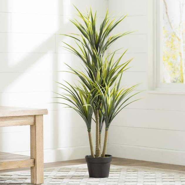 Best Artificial Indoor Plants Naples Florida Picture