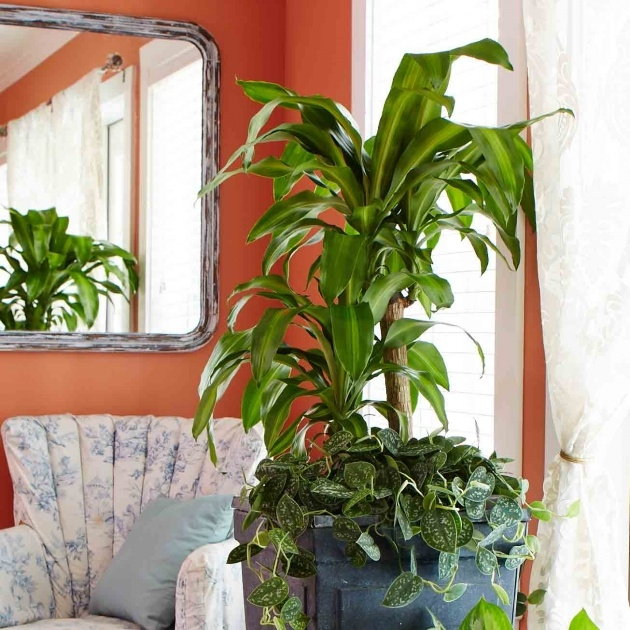 Best Best Indoor Plants For Low Light Photo