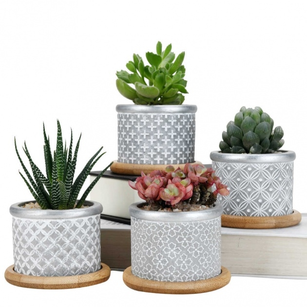 Best Cactus Plant Pot Picture