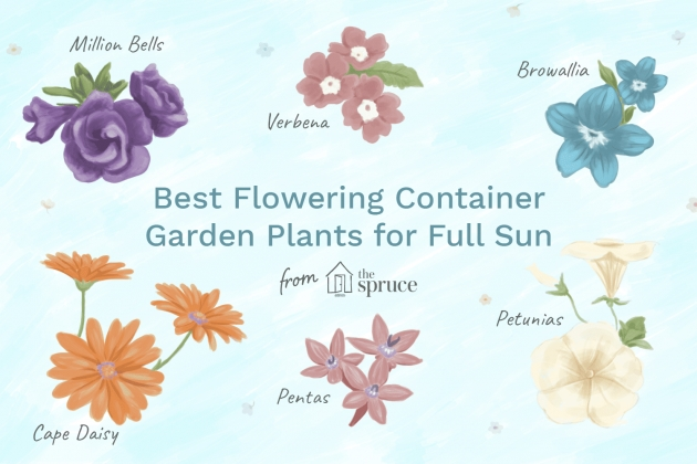 Best Container Gardens For Full Sun Photo