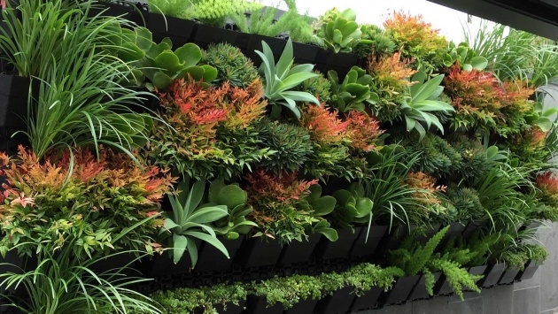 Best Cool Best Garden Plants Photo