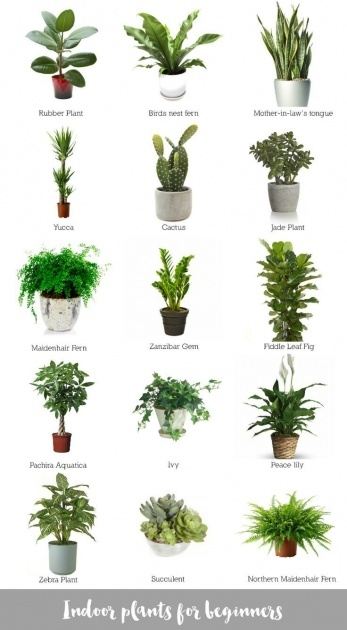 Best Cool Best Indoor Plants For Low Light Picture