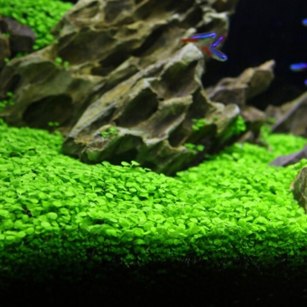 Best Cool Growing Aquarium Plants Photo