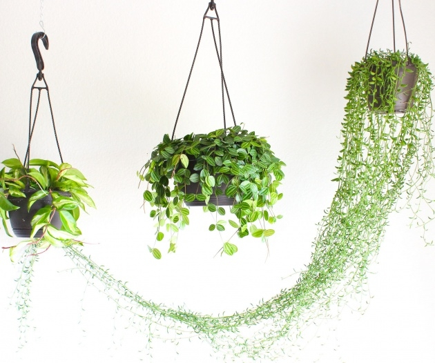 Best Cool Hooks For Hanging Plants Photo