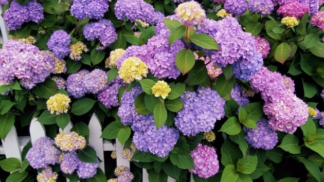 Best Cool Hydrangea Plant Photo