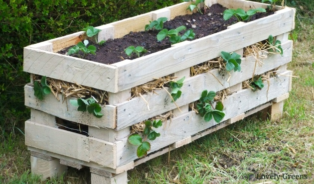 Best Cool Pallet Strawberry Planter Photo