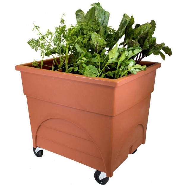 Best Cool Planter Boxes For Growing Vegetables Image