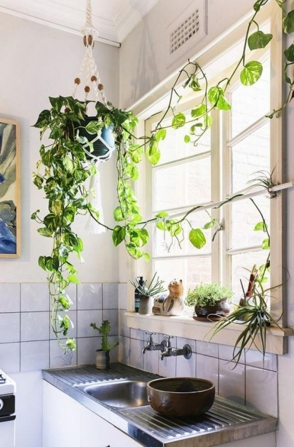 Best Cool Plants In Home Decor Photo