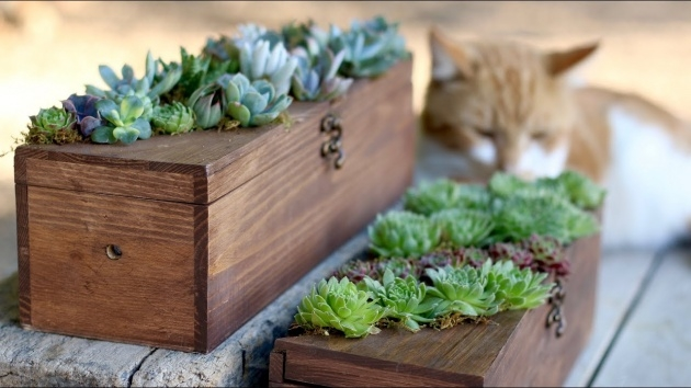 Best Cool Succulent Planter Box Photo