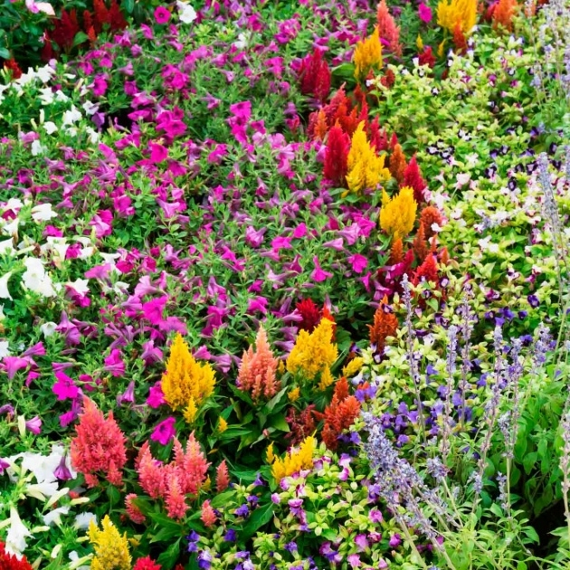 Best Flower Bed Plants Picture