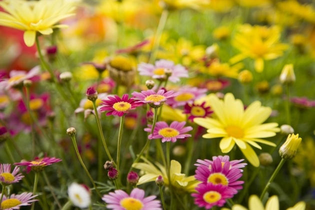 Best Flowering Plants Image
