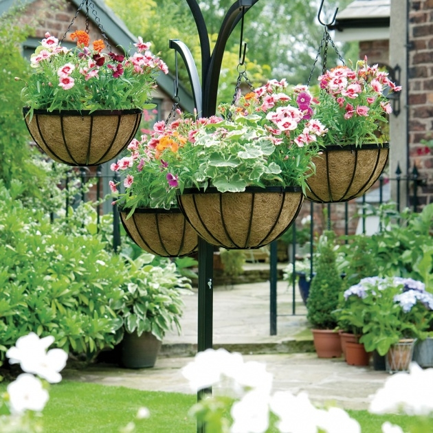 Best Hanging Basket Plants Picture